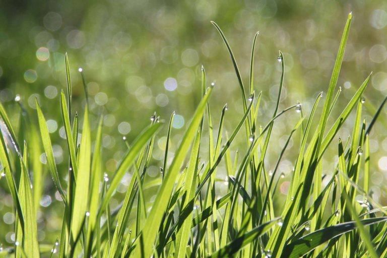 GO-GRASS - grassland business models